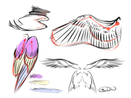 Wing Sketches by BlueDuskWolf