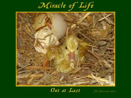MIracle of Life 6 by dragonpyper
