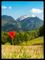 Poppy in Chartreuse by Bastos17