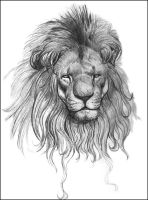 Lion by NathanRosario