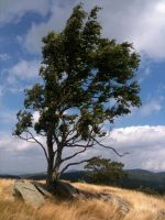 The Lone Tree by Shroomkin