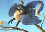 Blue Jay Gryphon by Nambroth