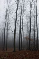 Foggy Forest 14 by sacral-stock