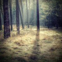 Forest Dreams by FilipR8