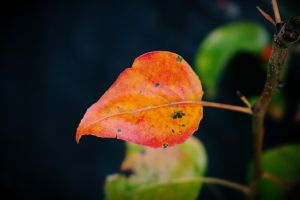 Bright Fall by its-EMIL-again