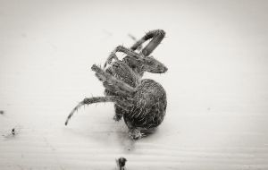 Untitled spidey by barefootphotos