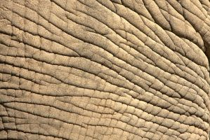 Elephant Skin by BonsEYE
