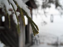 Winter Photo by MaryRose27