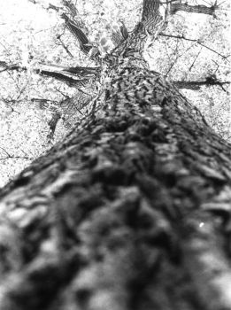 tree by bw-photography