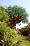Tree Of Life Garden by SurrealisticPillow88