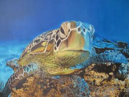 sea turtle by eymage