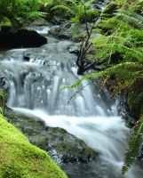 Cascade Falls on Orcas Island by donnasueb