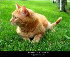 Portrait Of A Tom Cat by Aoxa-Cats