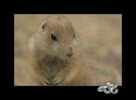At the Zoo : Prairie Dog Child by minainerz