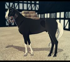 .:BMS Zaahir:. by BlueMoonStables
