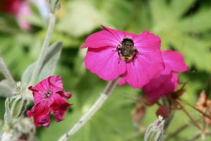 busy bee in color by nomad666