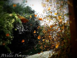 Fall photo c: by tazzgirl
