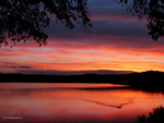 Sunset 2 ducks by Mogrianne