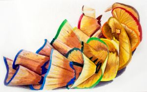 pencil shavings by shannongordy