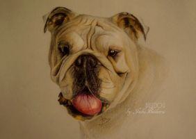 Bulldog by JuliaBadeeva