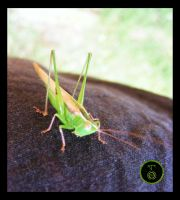 An Overly Friendly Grasshopper by Ranger-Roger-Reserve