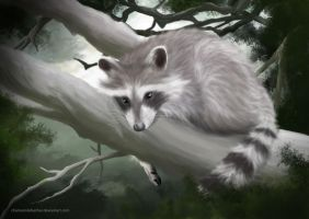 One Lonely Raccoon by chamomilefeather