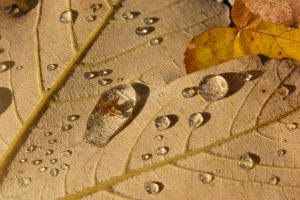 mysterious dewdrop on a leaf by Constantine87