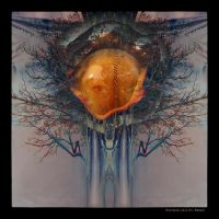 M12 Tree of Life by Xantipa2-2D3DPhotoM