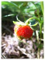 Baby strawberry by petzku