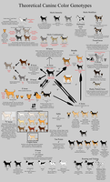 Allele Guide - Canine Color by Xenothere