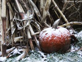 Snow Covered Pumpkin by rockershay
