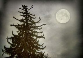 the moonlit pine by heatherspettals