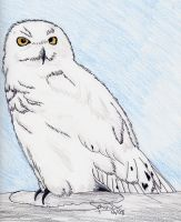 Mom's Snowy Owl by Sphinx47