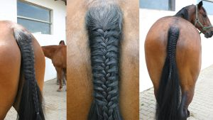 Horse Tail Hunter Style 1 by LuDa-Stock