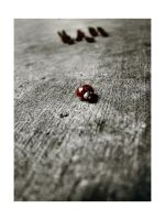the ladybug wars by IsItReal