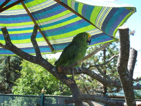 Parrot at the Zoo by sleekadesigns