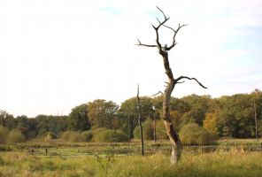 stock landscape dead tree in front of a lake by Nexu4