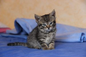 Baby cat by Flore-stock