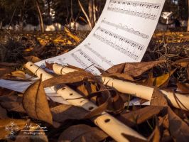 Autumn Melodies: Leaves by abravewolf