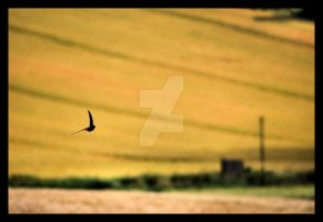 Wheat field flight by Deus-est-femina