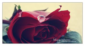 Single drop by Miss-Photo