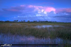 Jupiter-Florida-Wetlands-Pine-Glades-Natural-Area by CaptainKimo