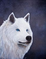 White wolf by simonbearedwards