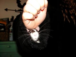 Rat up my sleeve by Nevuela