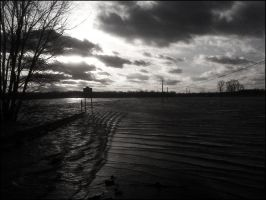 Black Swamp 5 by theory6-brian