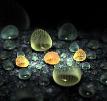Sea shells. by Kondratij