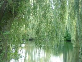 Pond between two willows by Soph-art-lover