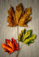 Autumn Trio G92 705222 by Partists