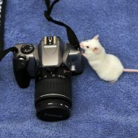 Photographer Mouse I by LDFranklin