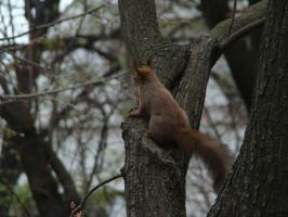 Squirrel 3 by happybg
